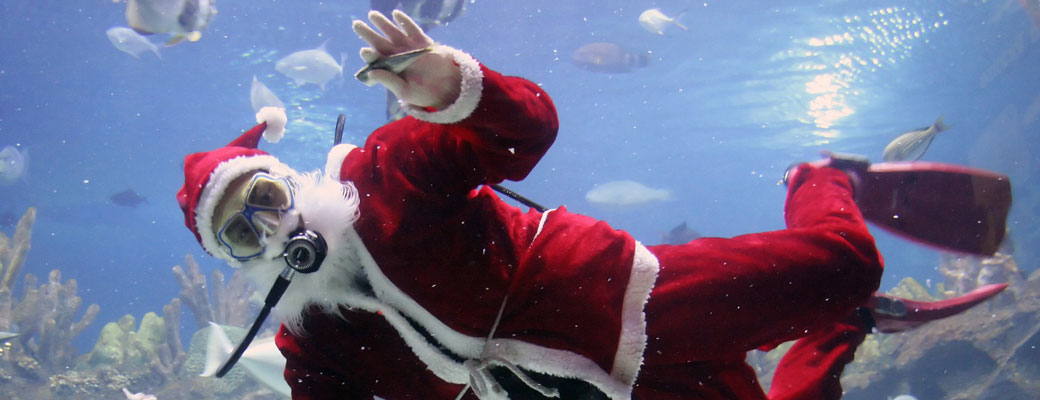 Weihnachtstauchen